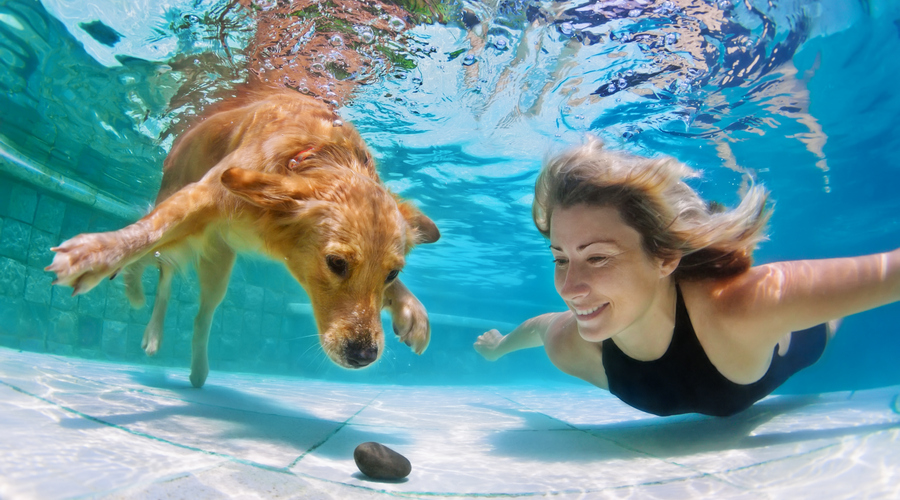 How To Keep Dog Hair From Ruining Your Swimming Pool - Gettle Pools Inc. - Sarasota