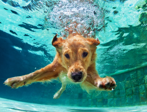 About Dogs In Pools: Benefits And What You Need To Know About It
