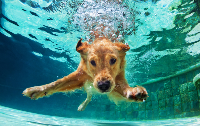 About Dogs In Pools: Benefits And What You Need To Know About It-Sarasota Pool