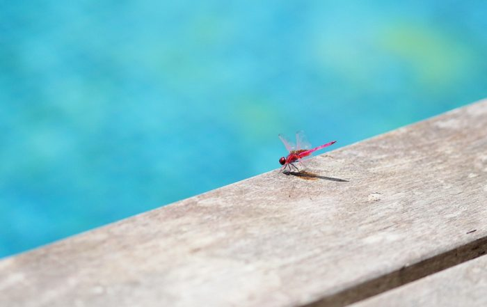 How to Keep Bugs Out of Your Swimming Pool